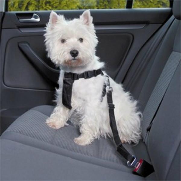 forts véhicule Grade magnétique Réfléchissant magnétique chien unité avec 2 chiens signe